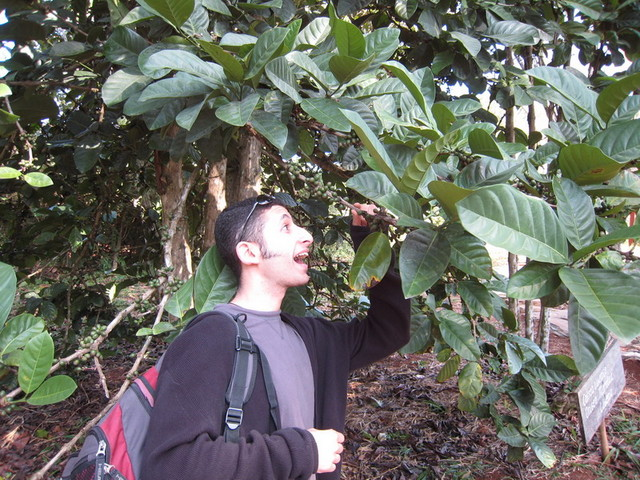 Trinidad-049 - (Wyell, Coffee Bean Plantation).JPG